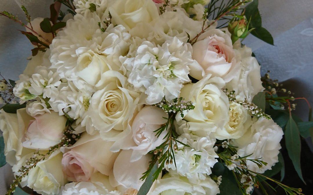 Eumundi Roses